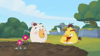 Angry Birds: Season 2: Stalker / Photochucked / Bake on! / Toy Hoggers / The Last Bird Standing / You Asked For It